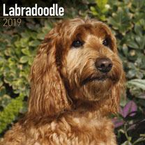 Image of Dog Breed 2018 Calendar - Labradoodle