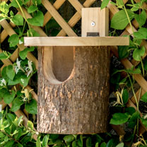 Nest Box - Robin Log & Log Tit