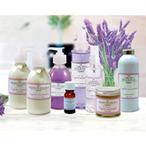 Lavender - Hand & Body Lotion