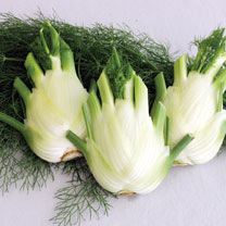 Florence Fennel (Organic) Seeds - Finale