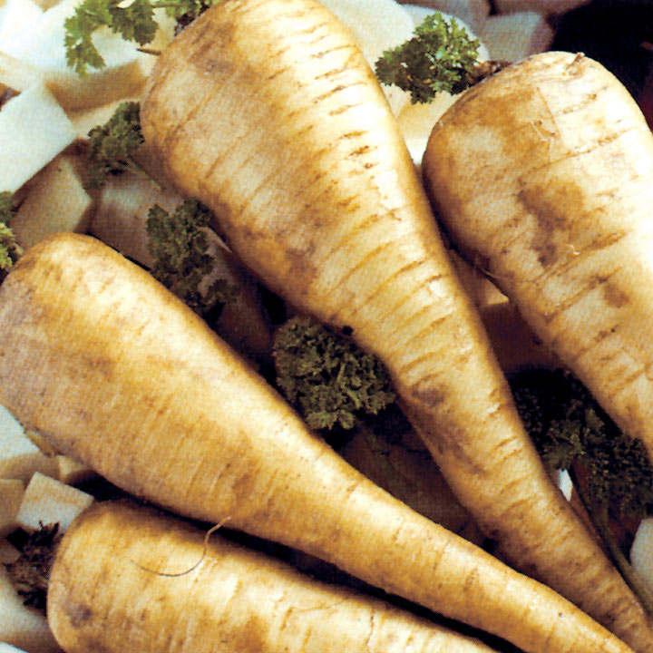 Parsnip (Organic) Seeds - Tender and True