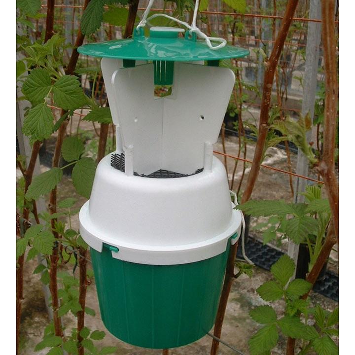 Raspberry Beetle Trap / Refill