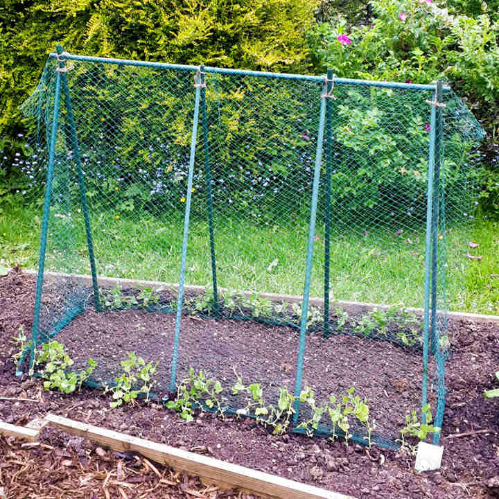Pea Support Frame Kit