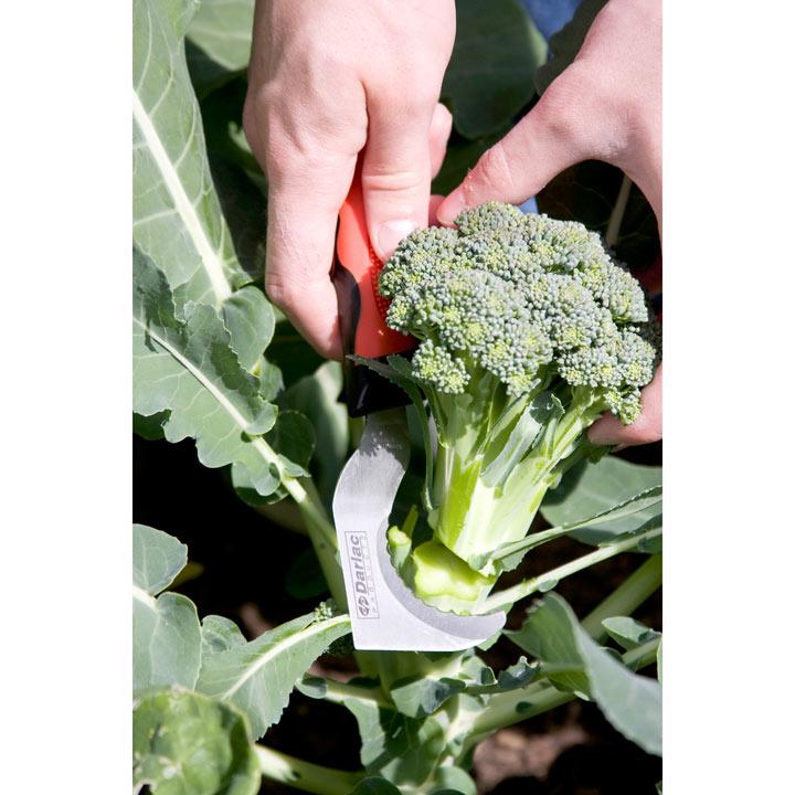 Hooked Garden Knife