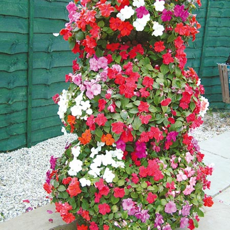Impatiens Seeds - Tumber Trailing Mixed