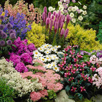 100 Perennial Plants for 100 - Lucky Dip