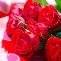 Rose Plant - Ruby Anniversary