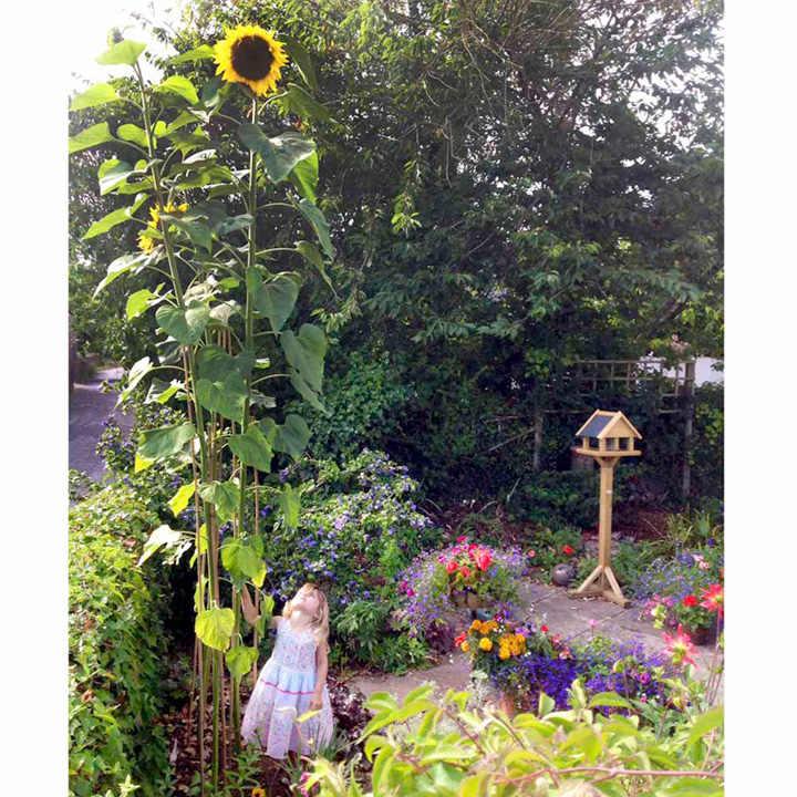 Large Vegetable Garden Fence