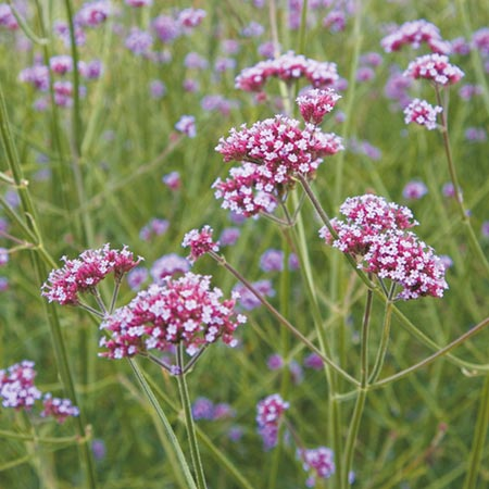 Best Perennial Plants - Collection