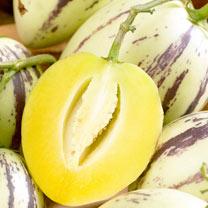 Melon Plant - Pepino Trio