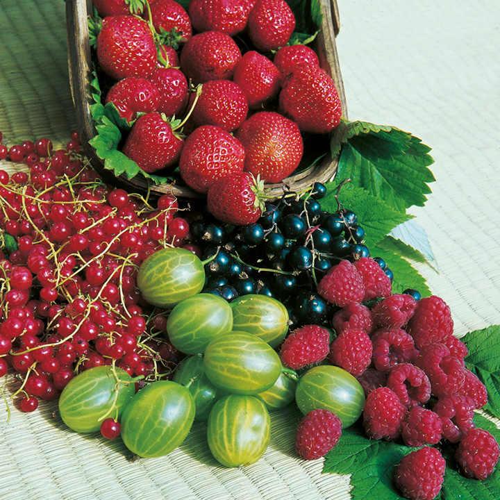 Fruit Nursery Clearance Pack