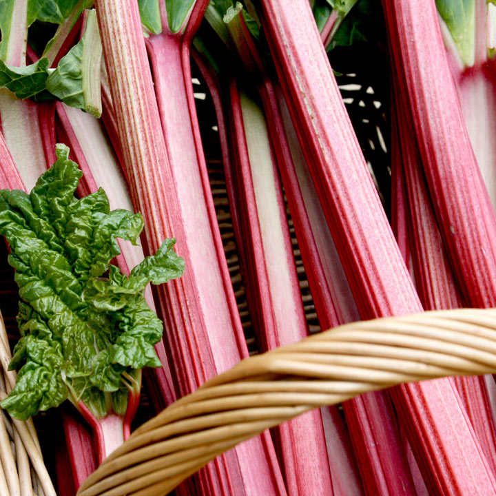 Rhubarb Crowns Grooveless Crimson (3)