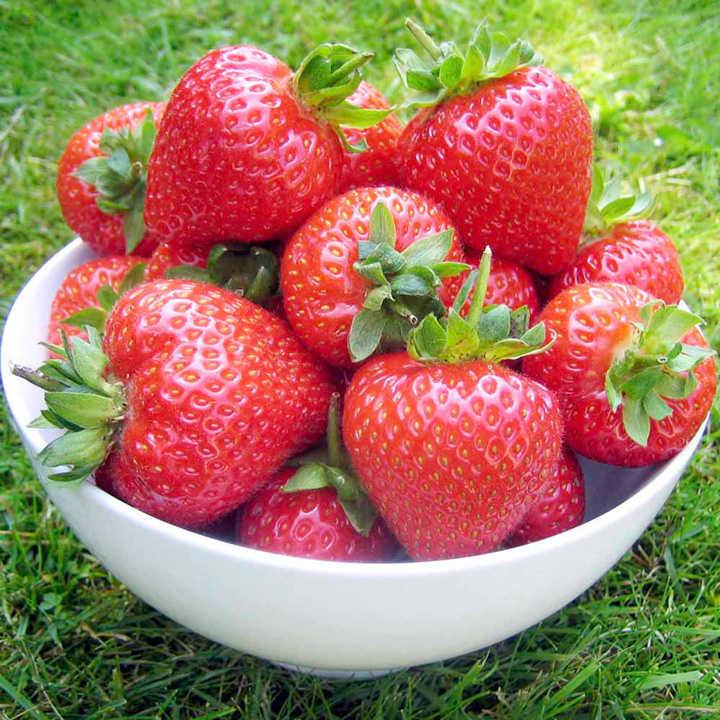 Strawberry Plants - Flamenco