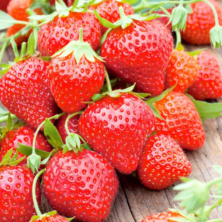 Strawberry Plants - Mara des Bois