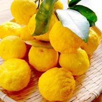 Citrus Plant - Yuzu