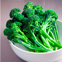Broccoli Plants - Sprouting Continuity Collection