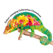 Calibrachoa Plants - Chameleon