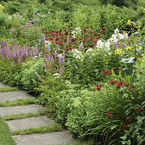 Cottage Garden Perennial Mix (18)