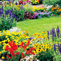 Image of Bedding Garden Ready Plants - Lucky Dip Collection (60 Plants)