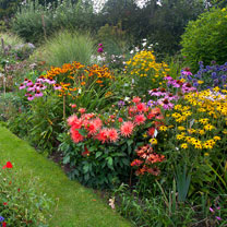 Cottage Garden Perennial Mix