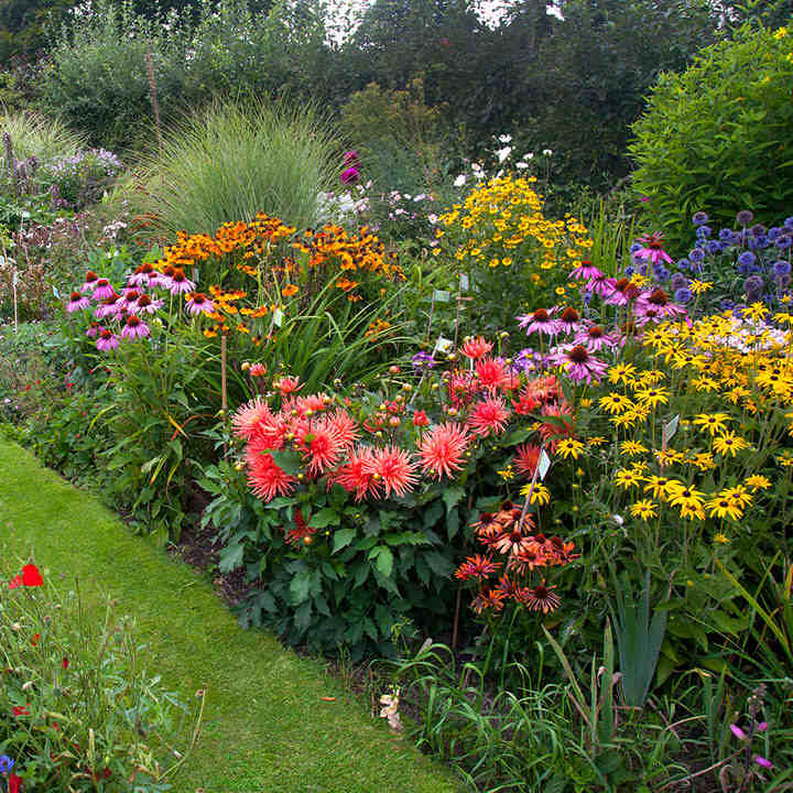 Summer Cottage Garden Favourites