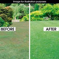 Luxury Lawn Seed - 20kg