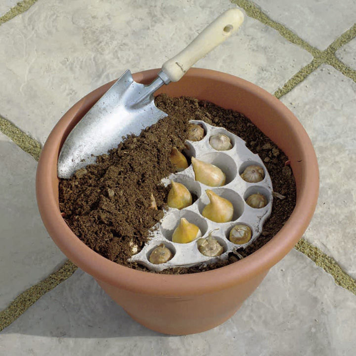 Plant O Tray Patio Preplanted Bulbs Tulip Narcissus