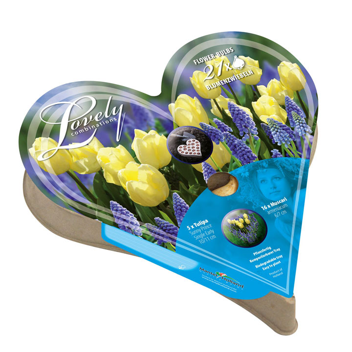 Plant-O-Tray Heart Preplanted Bulbs - Tulip & Muscari