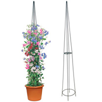 Obelisks - Pair of 2m