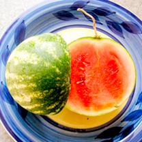 Watermelon Grafted Plant - F1 Mini Love