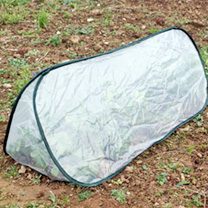 Pop-up Triangle Cloche Medium Polythene