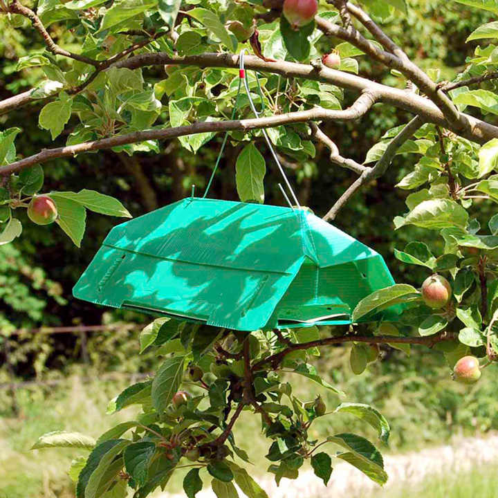 Codling Moth and Plum Moth Traps