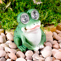 Bright Eye Frogs