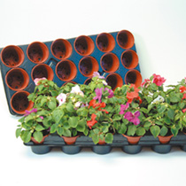 Growing on Pots and Trays, 9 Trays & 162 8cm Pots
