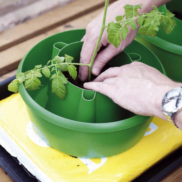 Plant Halos Dobies