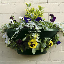 "Easy Fill Wall Baskets 20"" (50cm)"
