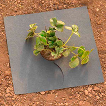 Our organic fyba mats will protect strawberries, salad crops and newly planted shrubs from muddy splashes, deter slugs, suppress weeds and retain mois