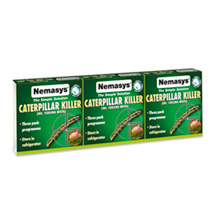 Nemasys Caterpillar and Codling Moth Killer