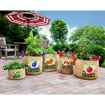 Vintage Peppers Planters