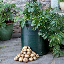 Seed Potatoes - Bargain Patio Growing Kit