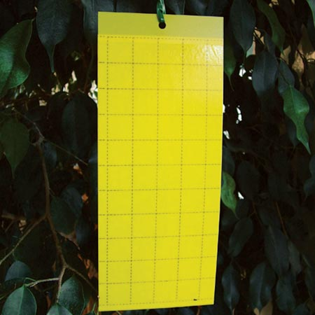 Yellow Sticky Traps