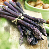 Asparagus Crowns - Pacific Purple