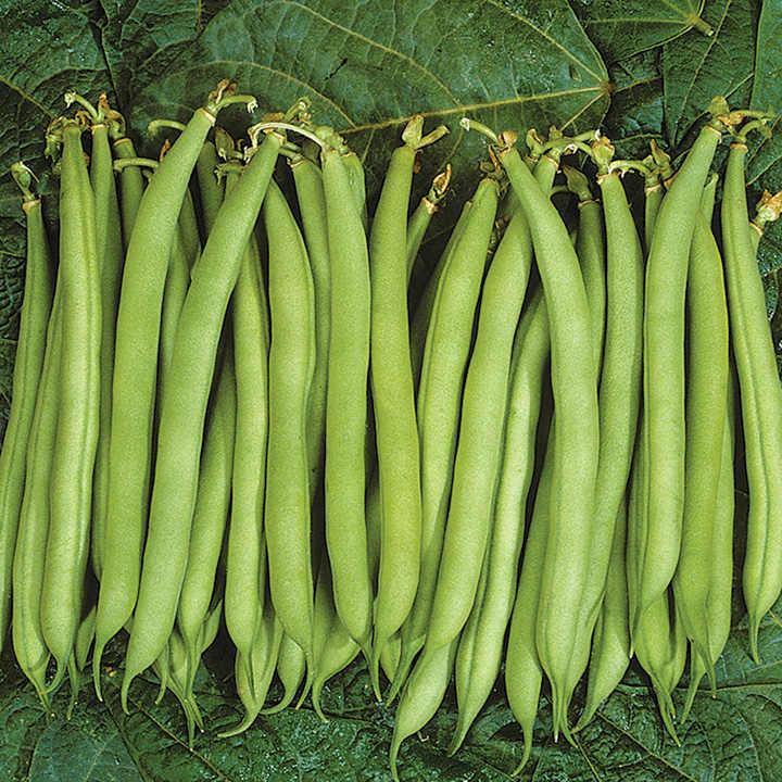 Bean Dwarf French (Organic) Seeds - Speedy