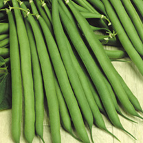 Dwarf French Bean Seeds - Stanley