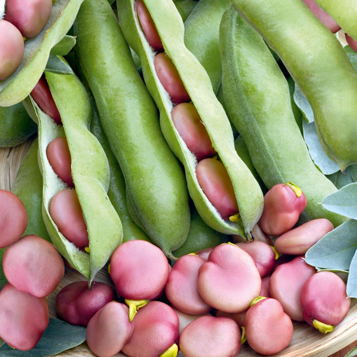 Broad Bean Seeds - Karmazyn