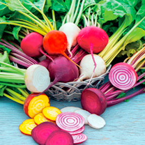 Image of Beetroot Plants - Rainbow Mix