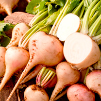 This white beetroot is sweeter and less earthy tasting than regular, with tasty, nutritious leaves. These make a great addition to any salad. It can a
