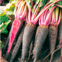 Image of Beetroot Seeds - Rouge Crapaudine