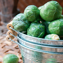 Brussels Sprout Plants - Crispus
