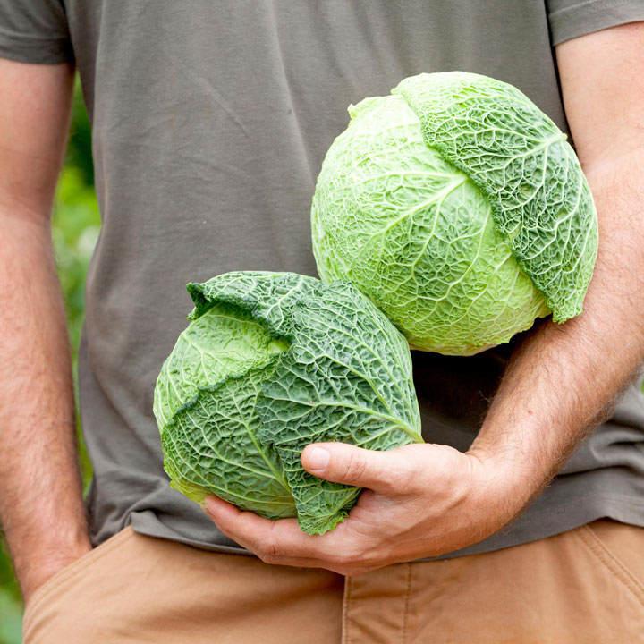 Savoy Cabbage Seeds - d'Aubervilliers